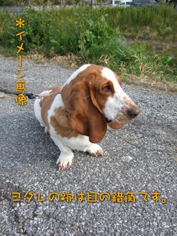 2007_03170007.jpg