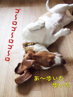 2007_03170011.jpg