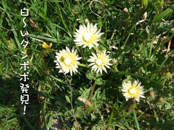 2007_04100045.jpg