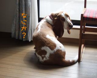 2007_05070010.jpg