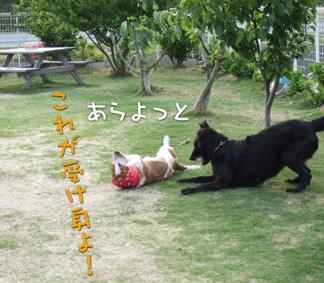 2007_05120015.jpg