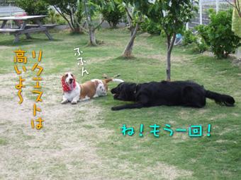 2007_05120017.jpg