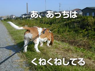 DSCN0103*.jpg