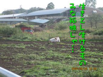 nagaoto6