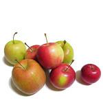 apple404.jpg