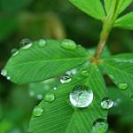 leaf408-01.jpg