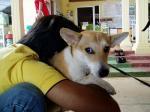 堀内さんと愛犬リリー