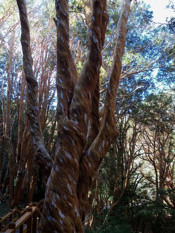アラジャネスの森