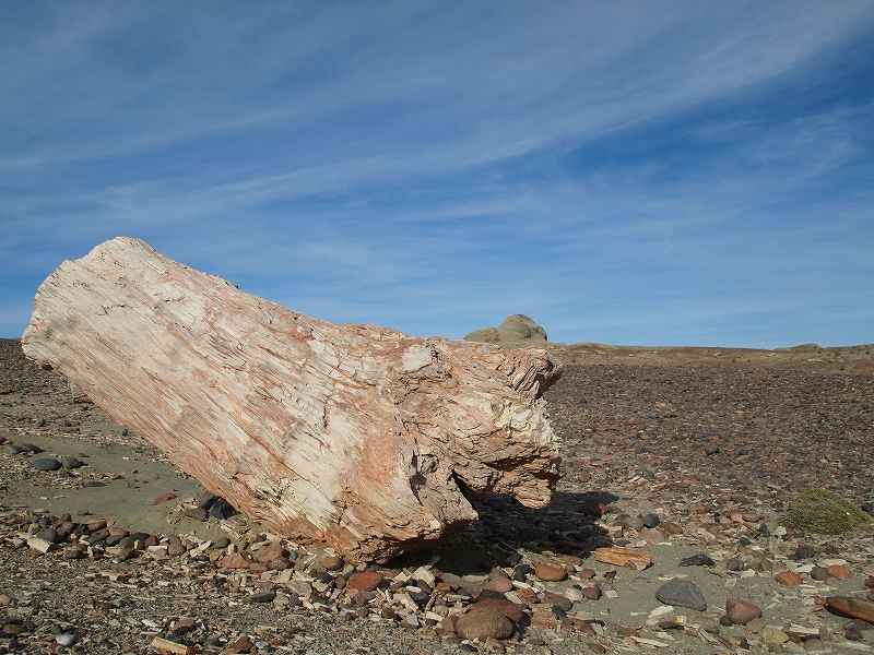 化石の森1