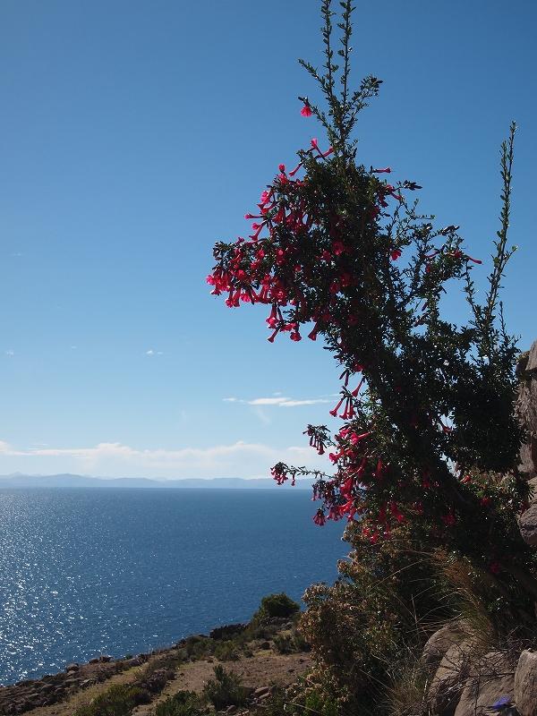 アマンタニ島