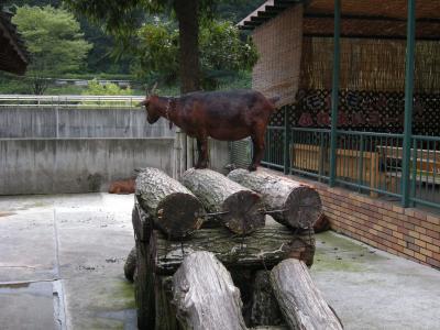 多摩動物園5