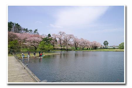 『桜』-6