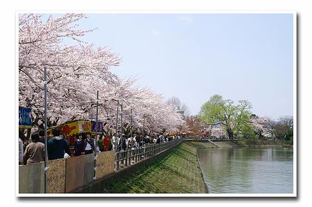 『桜』-13