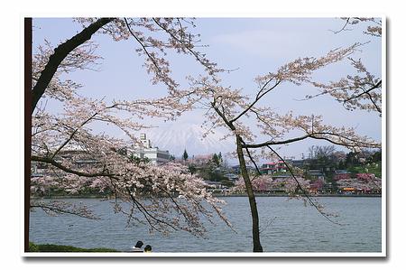『桜』-9