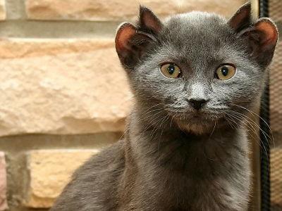 cat444.jpg