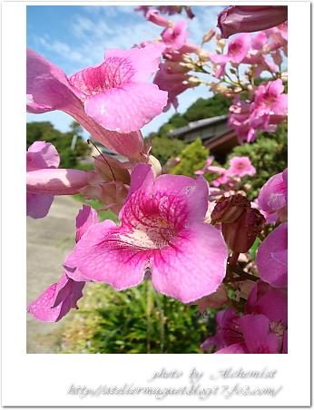 g9-pink.jpg