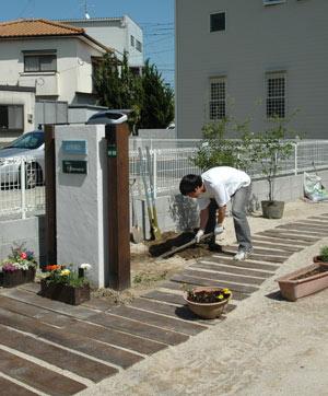 ハイノキ植える