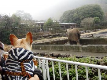ゾウさん、お鼻が長いのね~