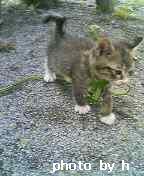 kitten03