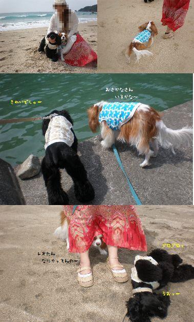 海岸散策ー