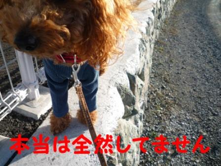 P1010831_edited-1.jpg