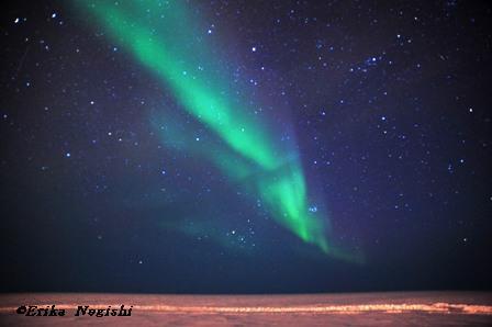 北極海上に舞う