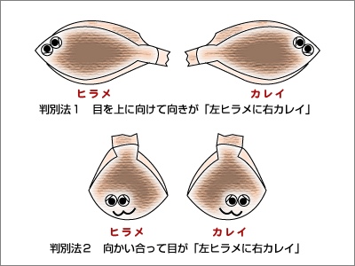 hirame_karei.png