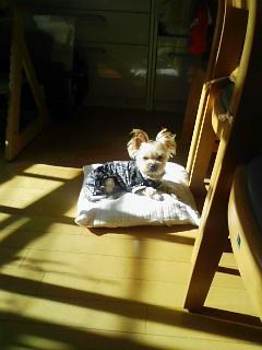 日向ぼっこでお昼寝
