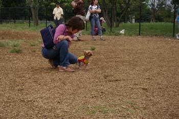 舎人公園ドッグラン5