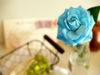 rose07.jpg