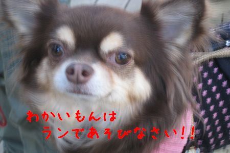 IMG_7019 12