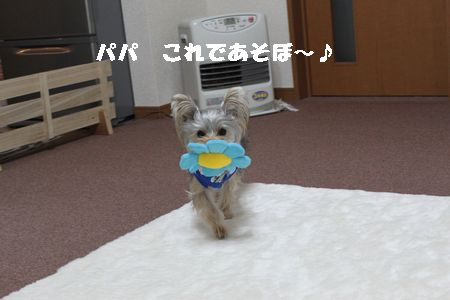 IMG_1250 花