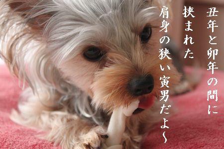IMG_8555 寅