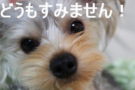 IMG_8078 そうじ7