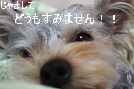 IMG_8073 そうじ5