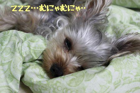 IMG_9275 眠い