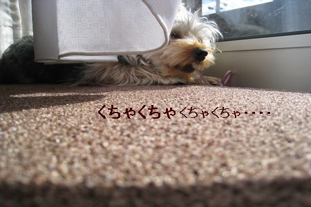IMG_9271 ひも