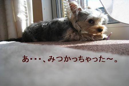 IMG_9269 ひも