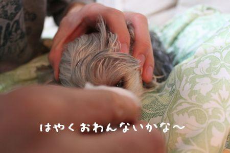 IMG_9433涙やけ
