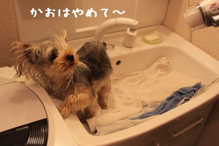 IMG_9517 ふろ4