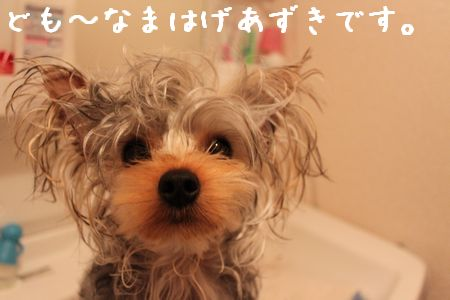 IMG_9502ふろ2
