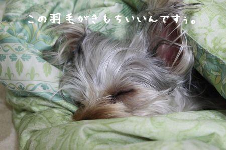 IMG_9851ね1