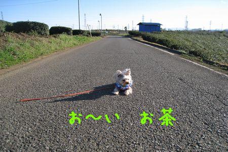 IMG_0169 お茶0