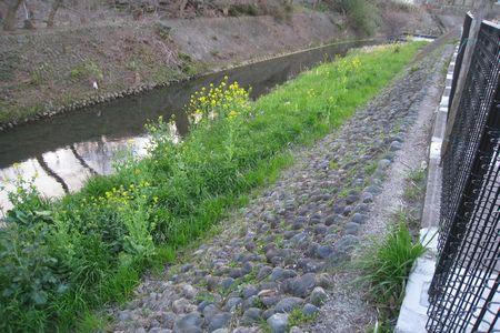 IMG_0434 川