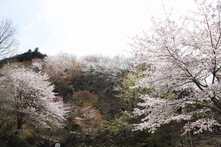 IMG_0412 鎌北湖2