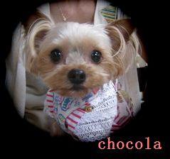 IMG_1795ちょこら16chocola