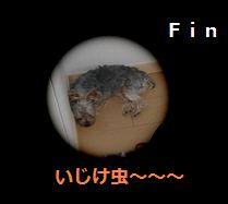 IMG_2302いじけむし