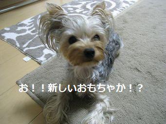 IMG_2358シルク2