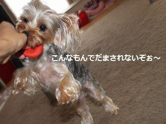 097あずきイクラ