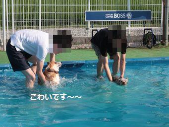 IMG_2667むぎ8